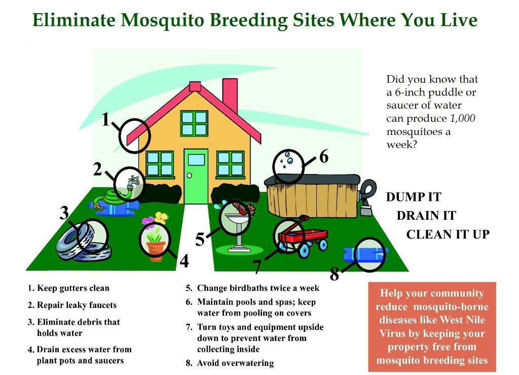 Eliminate Mosquito Breeding Sites Where You Live